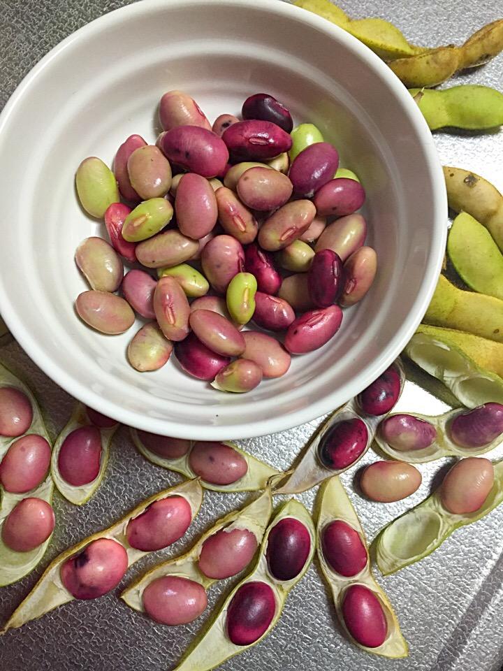 「黒枝豆」の産地や旬、ゆで方におすすめ3選。スーパーでも買える?の画像