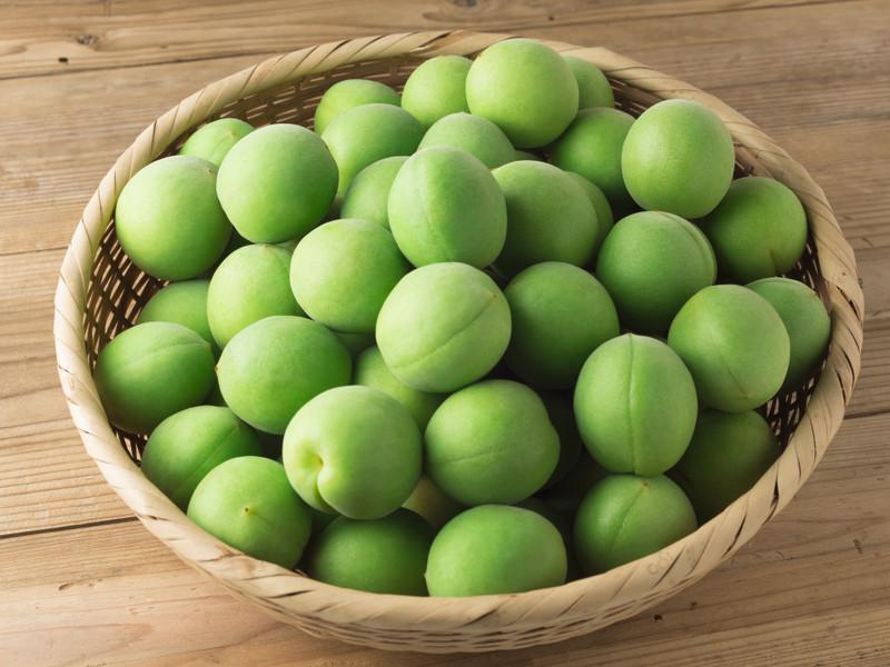 梅の実は何種類あるの?小粒・中粒・大粒のおすすめ品種15選の画像