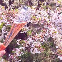 Chandon Rose 🥂🌸✨