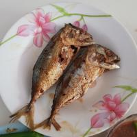 fried salted mackerel fish